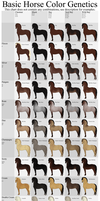 Basic Horse Color Genetics Chart by Wouv