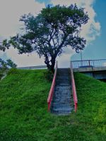 Stairs_Tree_stock by drowned-in-air-stock