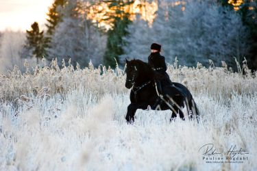 Winter Run by Colourize