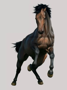 Horse study by MIR03
