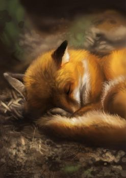 Fox sleepy by Pechschwinge