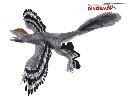 Planet Dinosaur- Anchiornis by Vespisaurus