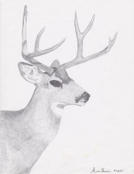 Mule Deer Drawing 2 by Zoltack429