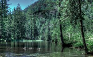 A Pond with trees by Toghar