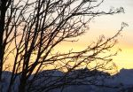 branches at sunset by VaybsStocks
