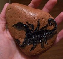 Scorpion - painted rock by TinyAna