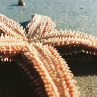 Sea Star by CourtneysConcepts
