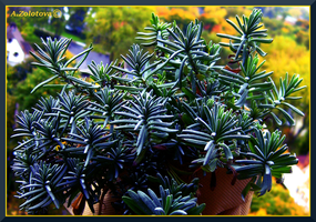 Rosemary 1 by AnnaZLove