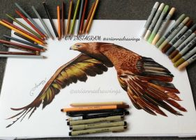 Eagle Drawing by ariannadrawings