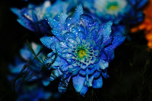 Blue Flower by tokuyama