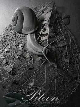 Paper Sculpture - Snail by 8thLeo