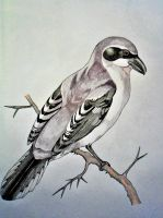 Shrike by Gogs87