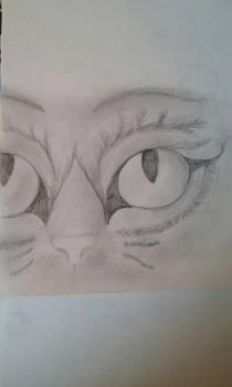 Cat Face  by Countrygal4ever