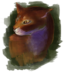 Abyssinian by koiffee