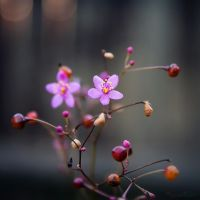 Evening Bloom by ntpdang