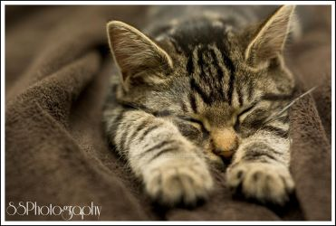Toby the cat by SSPhotographyinc