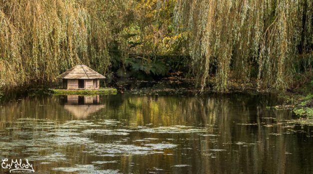 The Duck House by EmMelody