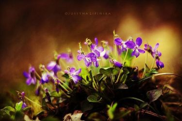 Just Flowers by Justine1985