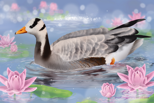 Bar-headed goose among the lilies by UszatyArbuz