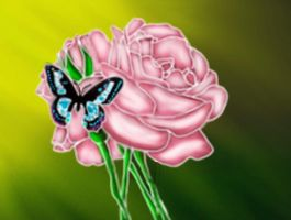 Butterfly and Rose by cutecolorful