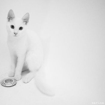 Invisible Cat by MarinaCoric