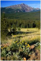 Wildflowers and The Rockies by kkart
