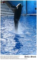 Sea World: Shamu Jump.9 by Della-Stock