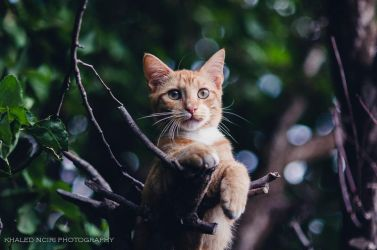 chat by struky