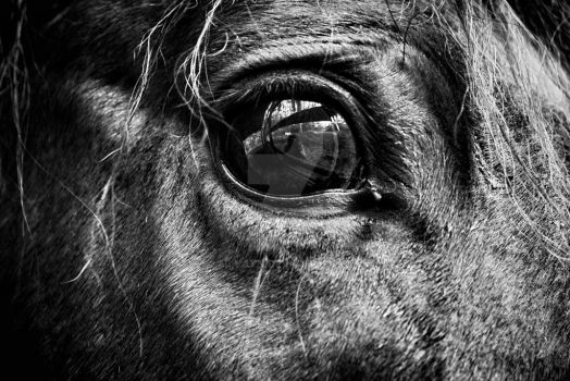 Eye of the Horse by Ailvayn