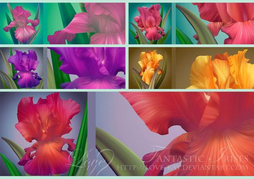 Beautiful Fantastic Irises by Love-Kay
