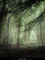 Forest 09 by AnitaJoy-Stock