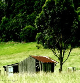 That Old Shack By The Tree by AwakenendByDreams