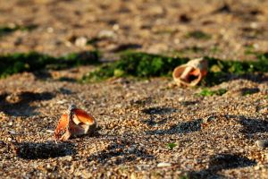 Empty shells by nicubunu