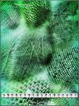 UNRESTRICTED - Reptile Skins Brushes by frozenstocks