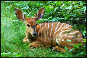 Fawn by 01Ronin