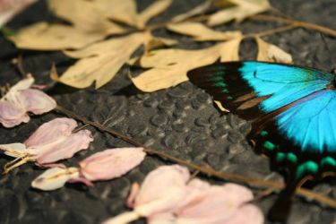 Butterfly1 by Hellzyahhh