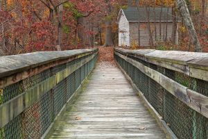 Rustic Autumn Boardwalk by somadjinn