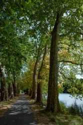 River trees by Pierre-Lagarde