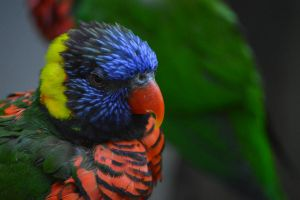 Colorful Feathers by GorgeousWreck
