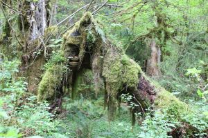 Hoh tree moss 2 by seancfinnigan