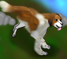 How I draw a kooikerhondje (request) Download by horse14t