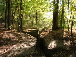 Rocky Forest Background 32 by FantasyStock