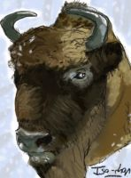 Bison by Mr-Lays