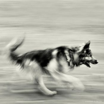 Speed by DREAMCA7CHER