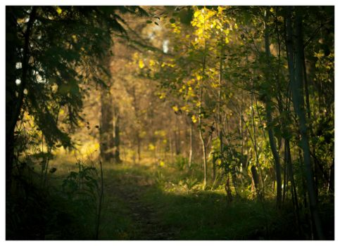 Exit the Black Woods by alexettinger