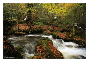 Autumn in Kennal by Kernow-Photography