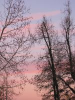 trees during a sunset by DisneyPrincessNeeNee