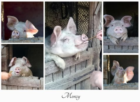 Monzy...a lilte  pig. by Phototubby