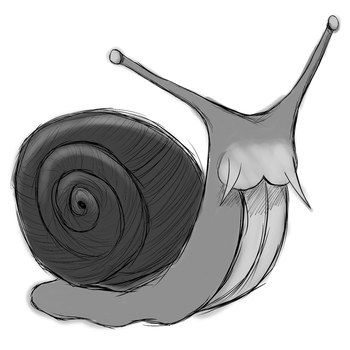 Snail by DeathbedBloom