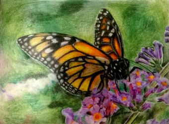 Crayola Monarch Butterfly by mrinx